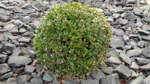 Trees Nature Blatter Bush Periwinkle Green Plant